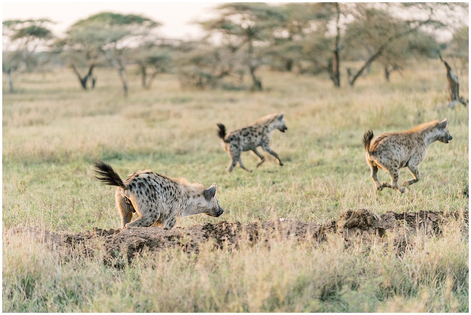 Kenya and Tanzania Safari- Fine Art Photographer